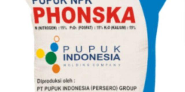 Pupuk NPK Phonska Bersubsidi Sulit Didapat, Petani di Junjung Sirih Menjerit